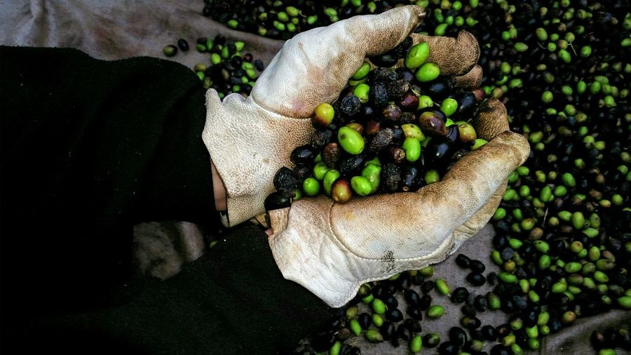 Cropped image of hand holding olives