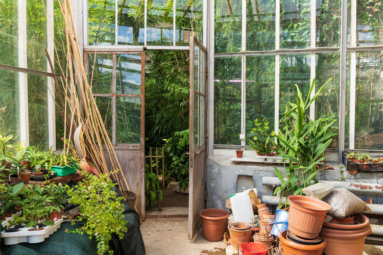 Potted plants in garden