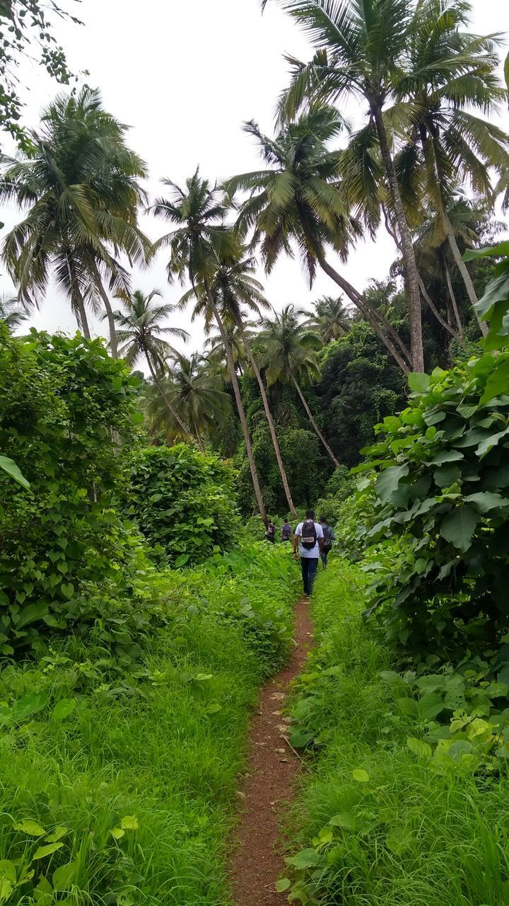 REAR VIEW OF PERSON WALKING ON FOOTPATH BY PALM TREES