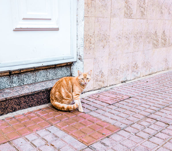 a ginger cat on a pavement Street Street Cat Orange Color Feline Pavement SPAIN Pets Domestic Cat Sitting Feline Animal Themes Architecture Ginger Cat Closed Door Whisker Tabby Cat Carnivora Stray Animal Entryway Front Door Yellow Eyes