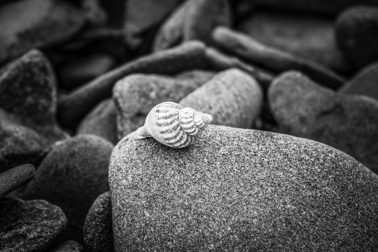 Close-up of shells on rock