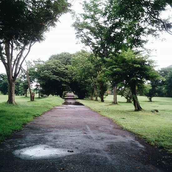 Vscocam Vscocamph VSCO British green road empty bored rain rainy