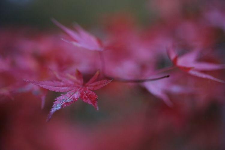 Autumn Colors Autumn Leaves Macro Beauty Rain Rainy Days Red