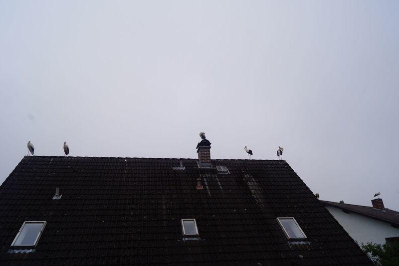 Störche Animal Themes Bird City Day No People Outdoors Sky