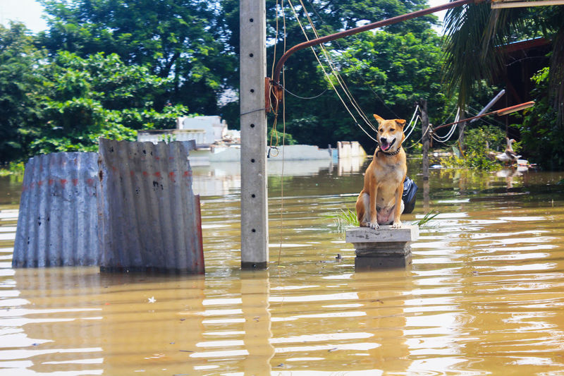 A dog is lost to the owner while flooding Lost Animal Themes Day Dog Domestic Animals Flood Flooding Mammal Nature No People One Animal Outdoors Owner Pets Tree Water Wet While