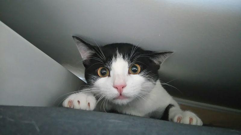 Félin  Eye4enchanting Portrait Of A Cat