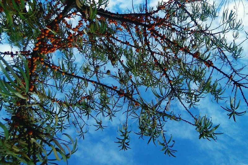 Low Angle View Tree Sky Nature Day Branch No People Outdoors Growth Beauty In Nature Freshness Close-up