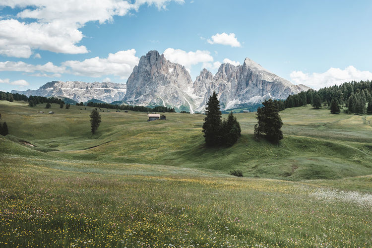 Plant Sky Grass Environment Landscape Beauty In Nature Mountain Cloud - Sky Scenics - Nature Land Green Color Tranquil Scene Nature Non-urban Scene Tranquility Field Tree Day No People Idyllic Mountain Peak Mountain Range Dolomiti Dolomites Alpe Di Siusi