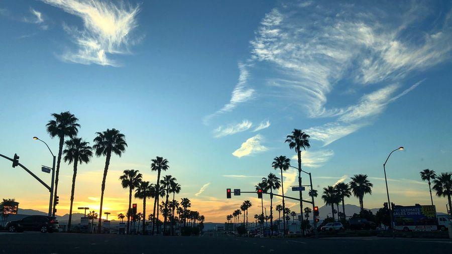 Silhouette Palm Tree Morning Sunrise_sunsets_aroundworld Good Morning Sunrise Tree Palm Tree Sky Plant Cloud - Sky Nature