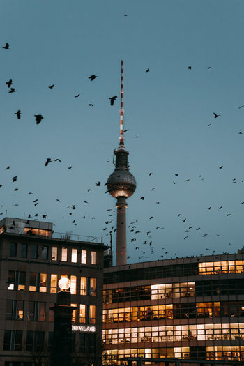 View of birds and buildings in city