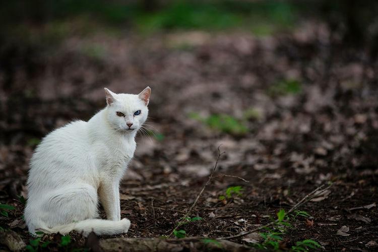 Portrait of a white cat on field