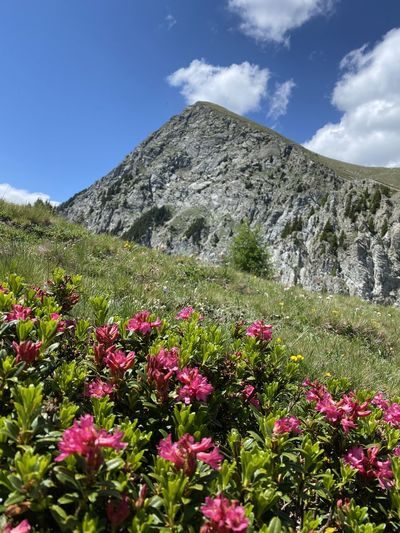 Scenic view of flowering plants in mountains against sky