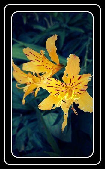 Fleur Jaune EyeEm Flower Flowers Flower Collection Fleurs Du Jardin Fleur Yellow Flower