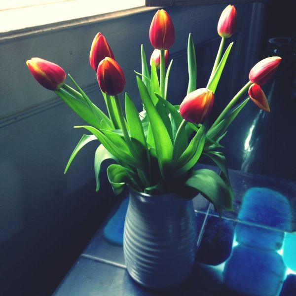 Lovely tulips a gift from a very kind friend, lucky me! Window Stillife Tulips Natural Beauty