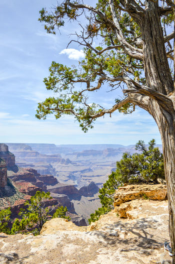 Arizona Grand Canyon Beauty In Nature Branch Day Growth Landscape Mountain Mountain Range Nature No People Non-urban Scene Outdoors Physical Geography Rock - Object Scenics Sky Sunlight Tranquil Scene Tranquility Travel Destinations Tree My Best Travel Photo My Best Photo