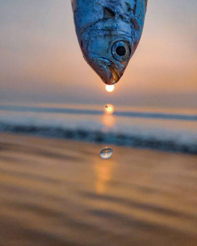 Close-up of jellyfish in sea against sunset sky