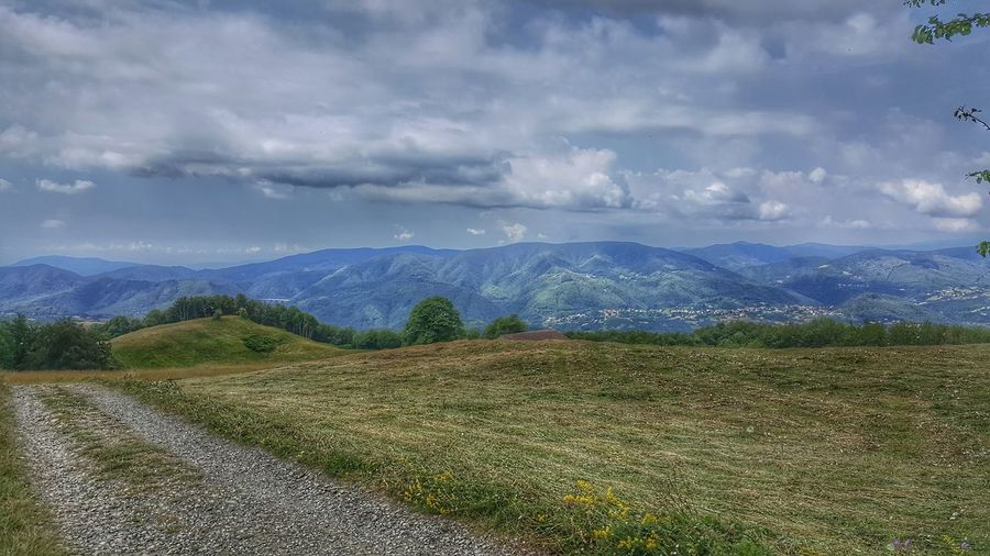 Tea Crop Tree Mountain Rural Scene Agriculture Field Sky Landscape Mountain Range Cloud - Sky