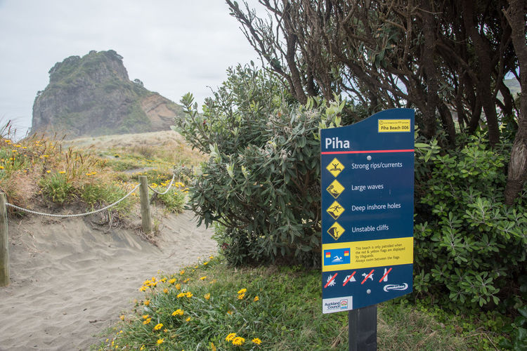 Auckland, New Zealand - December 17,2016: Entrance sign to the black sand Piha Beach with Lion Rock in on an overcast day in Auckland, New Zealand Auckland Entrance Lion Rock Beach Black Communication Geology Guidance Information Information Sign Mountain Nature New Zealand Outdoors Piha Plant Safety Sand Sand Dune Script Sign Text Volcanic Landscape Volcano Western Script