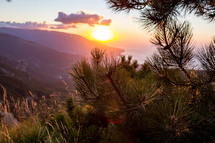 Beauty In Nature Cloud - Sky Coniferous Tree Focus On Foreground Growth Idyllic Lens Flare Mountain Nature No People Non-urban Scene Orange Color Outdoors Plant Scenics - Nature Sky Sun Sunlight Sunset Tranquil Scene Tranquility Tree