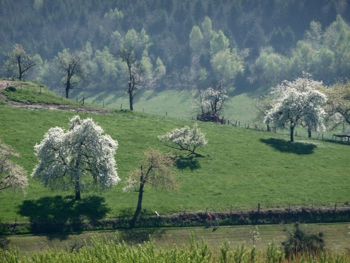 Beauty In Nature Tranquil Scene In The Black Forest Germany Lost In The Landscape