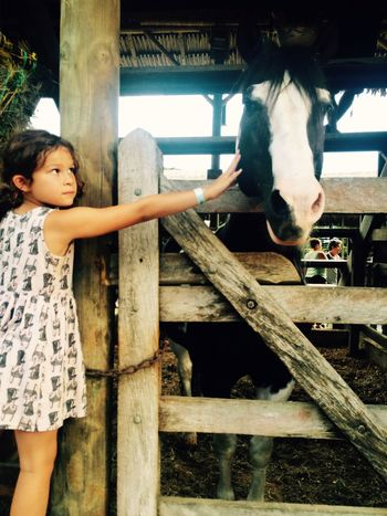 Horse Life Bauernhof Kids Being Kids Farm Life Touching Love Animal All Is Well Animal Love Animal Lover Wishyouwerefree Beautiful Being