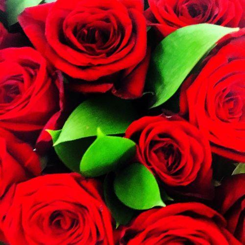 розы букет любимыецветы красота спасиболюбимому Новосибирск супер моилюбимые