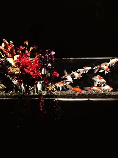 GoldFish! Aquarium