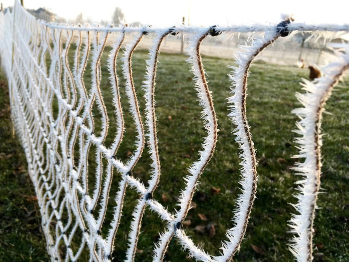 Close-up Fence Freshness Frost Grass In A Row Nature No People Outdoors
