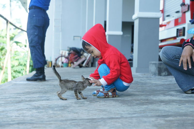 my kid play with little cat Pets Real People Casual Clothing Domestic Domestic Animals Low Section Leisure Activity Lifestyles Pet Owner Kid