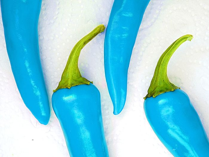 Chili Pepper Blue Blue Hot Chili Peppers Close-up Day Food Freshness Funky Funky Peppers High Angle View No People White Background