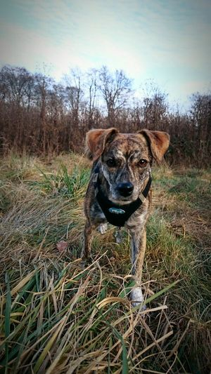 Weltbeste Hündin <3 Dog Pets Close-up No People Standing Sky Nature Day Plant Tree Domestic Animals Field Growth Portrait Looking At Camera Mammal Outdoors Animal Themes One Animal Grass Best Dog Animal Love Dog Love Dogs Love