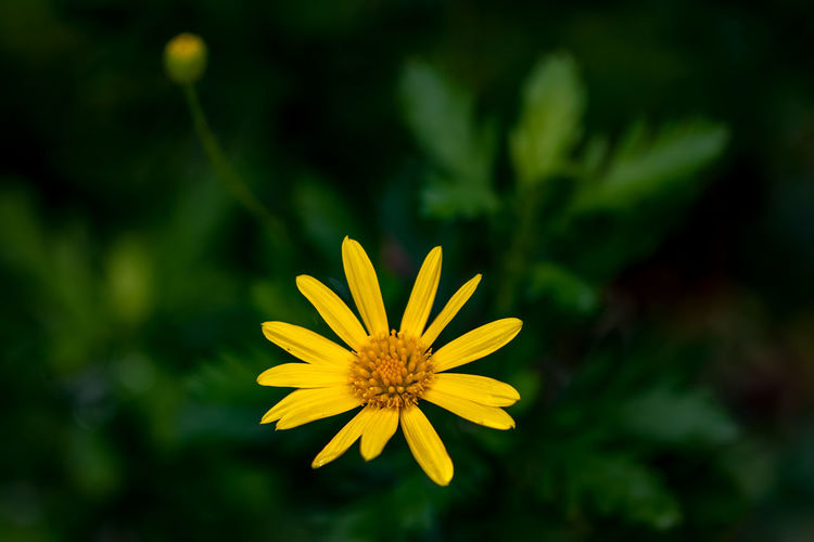 Flower Flowering Plant Yellow Plant Freshness Fragility Vulnerability  Petal Flower Head Inflorescence Beauty In Nature Growth Close-up Focus On Foreground Nature Pollen No People Outdoors Day