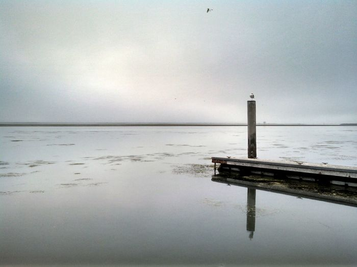 Two Is Better Than One Dock Weathered Humboldt County California Getting Inspired Foggy Day Capture The Moment From My Point Of View Mobile Photography Smartphonephotography Lobuephotos Motorola Eye4photography  EyeEm Gallery Eeyem Photography EyeEm Exploring No People Eyeem Reflections My Post Seagull Flying Bird Eyeem California Taking Photos