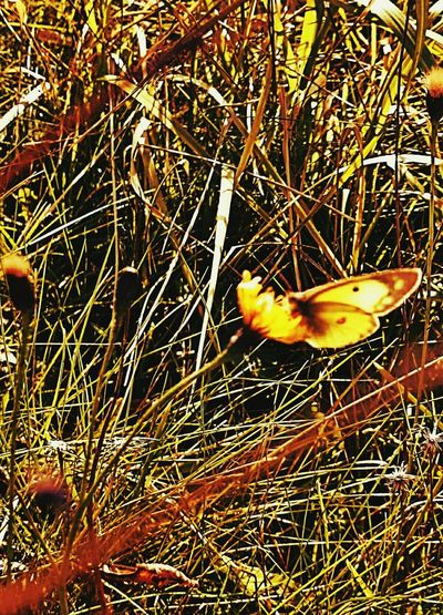...butterfly in late october... Androidography Autumn Beautiful Nature Authentic Moments ButterflyAutumnbutterfly