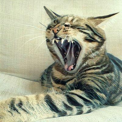 Yawning Gucio Yawning Cat Prisma_Filter Prisma Effect Prisma Art Cat♡ Cat Lovers Cats 🐱 Gucio