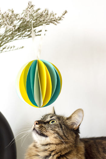 She had to be part of the photo shooting of my paper deco - ofc :)) Pets Domestic One Animal Animal Themes Domestic Animals Cat Feline No People Plant Looking Decoration Color Colorful Animal Domestic Cat Sitting Globe