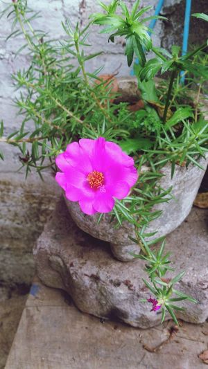 Flowers Flor Pink Flowers linda flor rosa. Cute pink flower