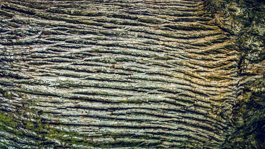 Pattern Nature Growth Beauty In Nature Full Frame Wood Tree Skin Corteza De árbol Maximum Closeness Lasmédulas Hundredyears EyeEm Gallery Check This Out Abstract