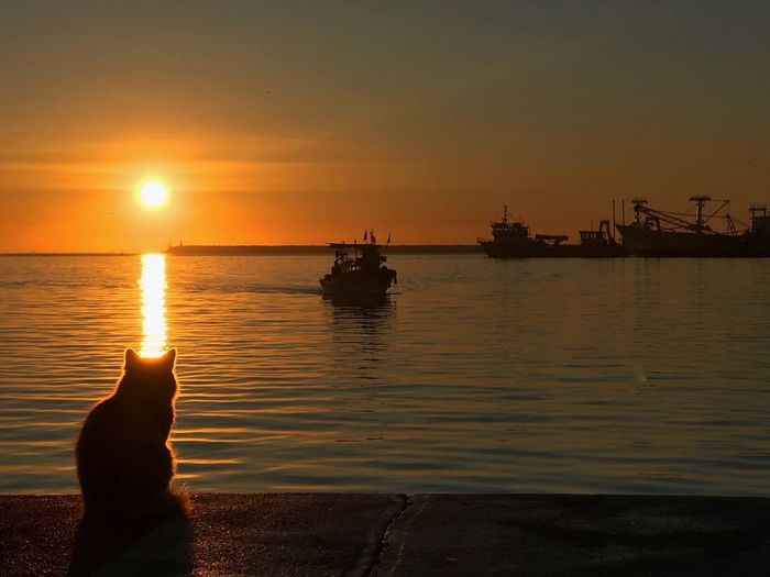 Silhouette cat sitting by sea against sky during sunset