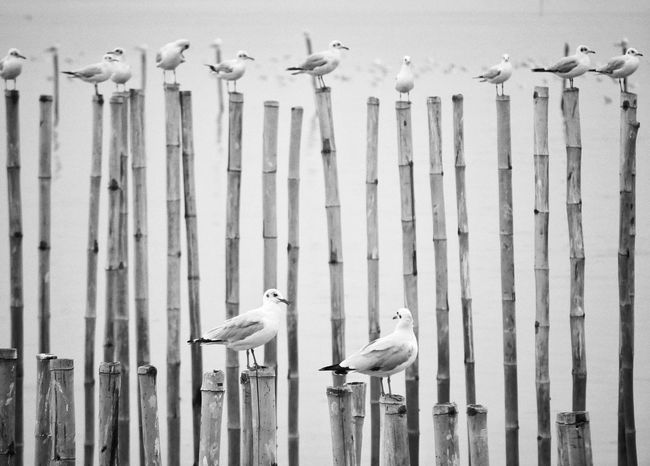 2 Seagull celebrities Wings Wind Sea And Sky Seagulls Seagull Celebrity Black And White Bestoftheday Best EyeEm Shot Birds Bird Photography Together Sweet Top Perspective Zoom Day Outdoors Pattern Full Frame Animals In The Wild No People Animal Themes Corrugated Iron Close-up