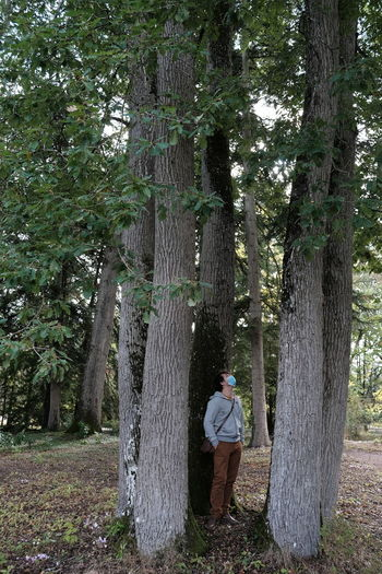 Rear view of man standing by tree in forest