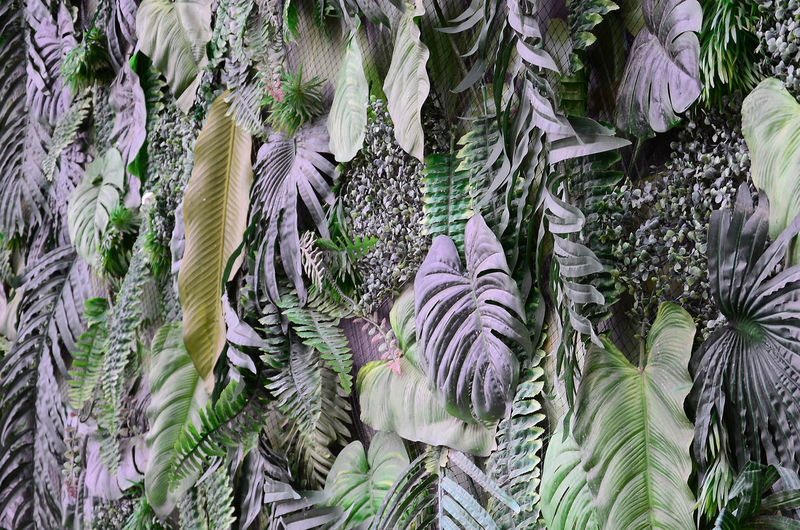 Jungle Leaf Floral Leaves Green Concept Background Forest Pattern Plant Tropical Abstract Art Beautiful Botanical Botany Branch Closeup Coconut Creative Dark Decoration Ecology Environment Exotic Ferns Flat Flora Foliage Fresh Freshness Garden Greenery Growth Hipster Houseplant Lay Minimal Monstera Natural Nature Organic Plastic Palm Season  Spring Summer Texture Tree Wallpaper