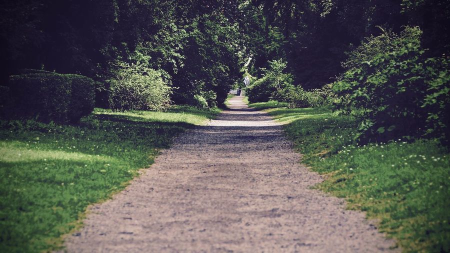 Pathway along trees in park