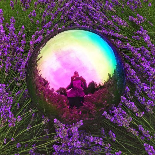 IPhoneography Lavendar Lavendar Flowers Garden Globe Garden Reflection Psychedelic Psychedelic_colors