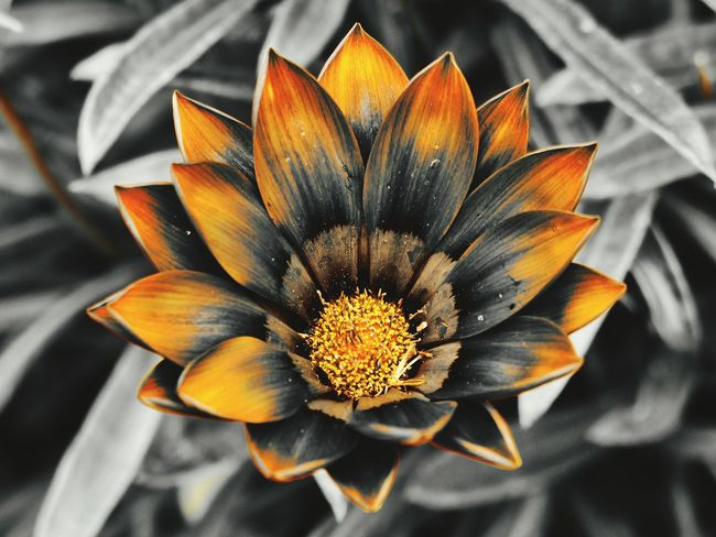 Fokus auf Orange