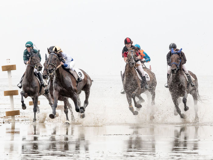 Animal Themes Fun Galope Race Horse Horses Outdoors Sports Photography Togetherness
