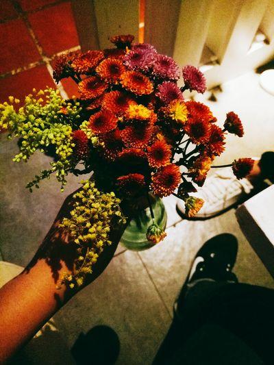 beautyful Flower Human Hand Flower Head Close-up Plant