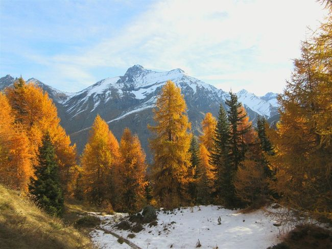 Aostavalley Mountains Aosta Valley Wunderbar I Love Italy  Enjoying Life Mountainview Valsavarenche Trees Yellowtree Sky And Clouds