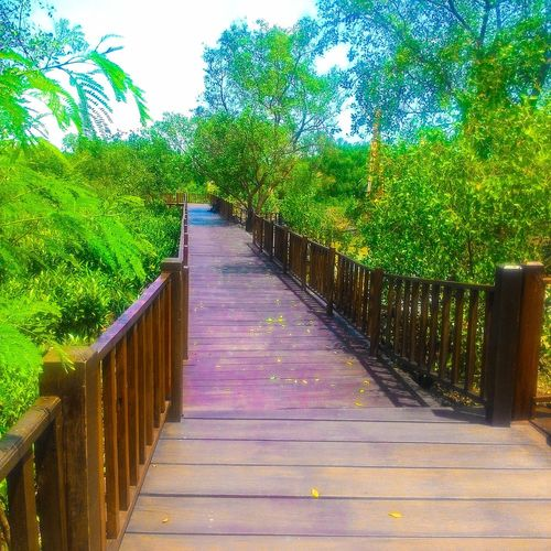 Jembatan mangrove surabaya First Eyeem Photo