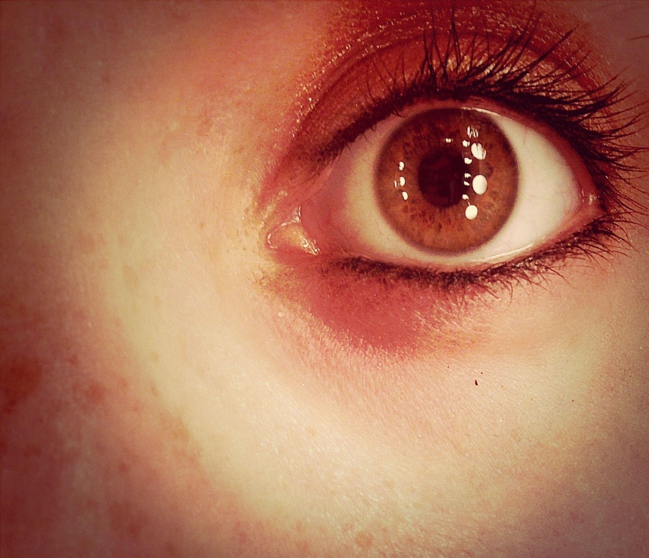 human eye, close-up, eyelash, looking at camera, portrait, eyesight, indoors, human face, human skin, extreme close-up, headshot, part of, lifestyles, young adult, sensory perception, eyebrow, iris - eye